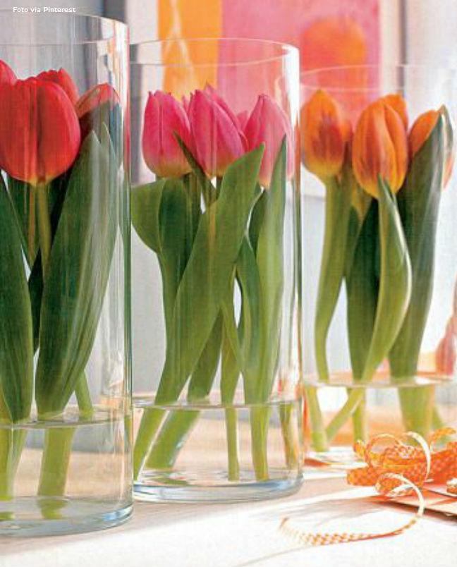 19 tulipas